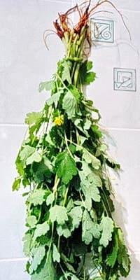 Подвешенный для сушки пучок чистотела, когда собирать чистотел нужно с корнем