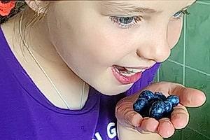 Девочка кушает голубику