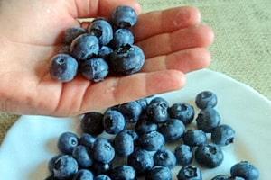 Голубика очень полезная ягода