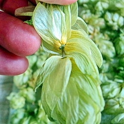 Под железками видна желтая пыльца