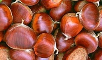 Орехи съедобного каштана, их людям можно есть, а конский каштан нельзя